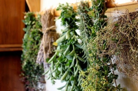 drying-herbs-1