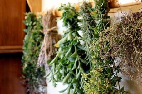 drying-herbs-1