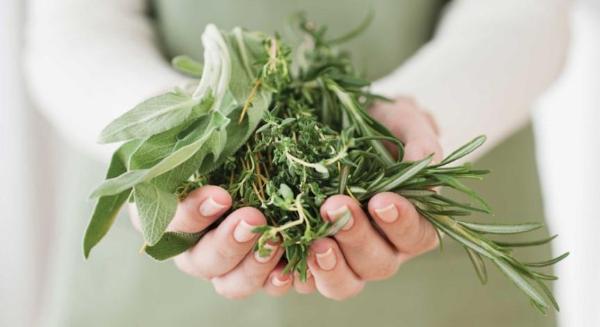 Herbs As Primary HealthcareTool.