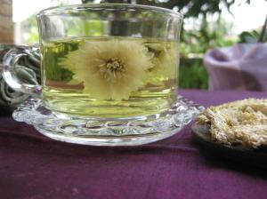 Chrysanthemum_Tea