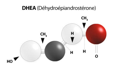 What Is DHEA – {dehydroepiandrosterone}?