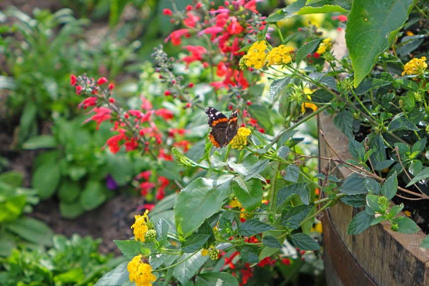 Garden For Birds And Butterflies – Themed Garden.