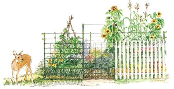 Choose the Best Garden Fence.