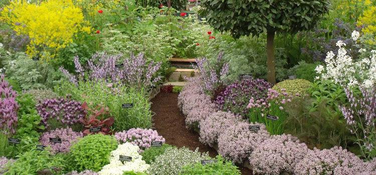 Herb Garden Design101