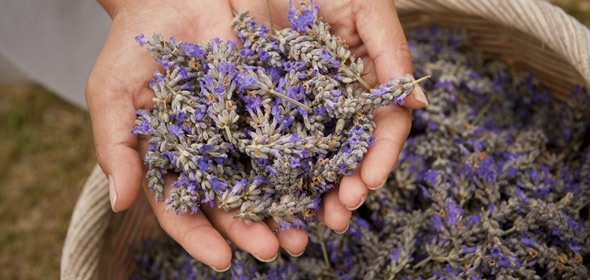 7 Cool Things We Never Knew Lavender Could Do