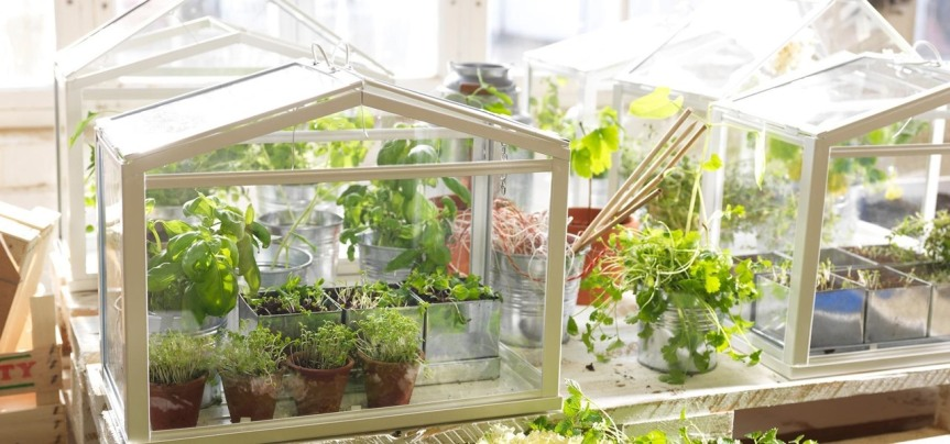 Food Tool Friday: Grow Fresh Herbs & Veggies Indoors with a TabletopGreenhouse