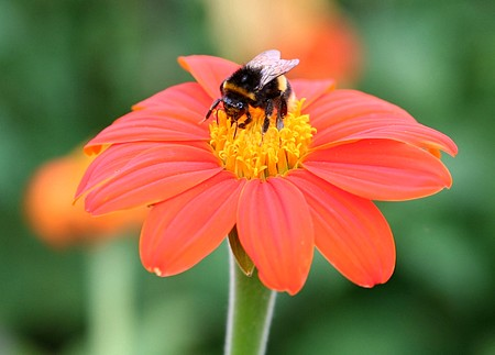 GET BUSY ATTRACTING BEES!