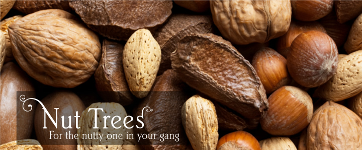 Consumers Of Tree Nuts More Likely To EatHealthier