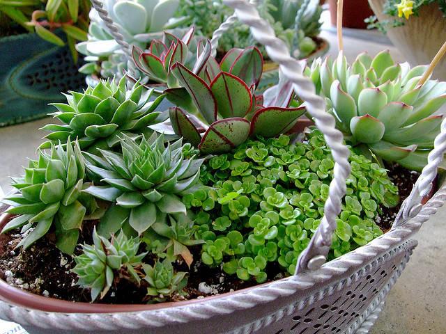 About 'Modern Botanicals'
