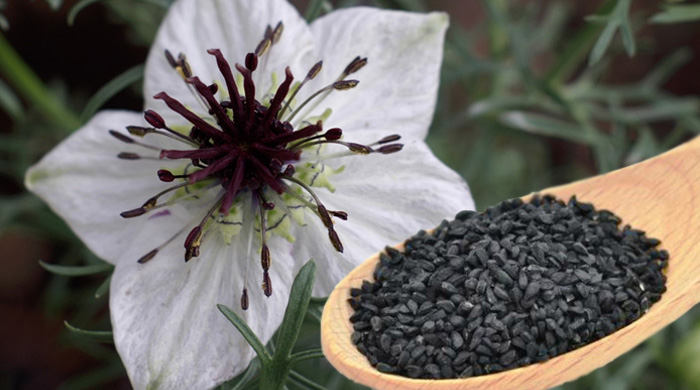 Black Cumin (Nigella sativa,Ranunculaceae)
