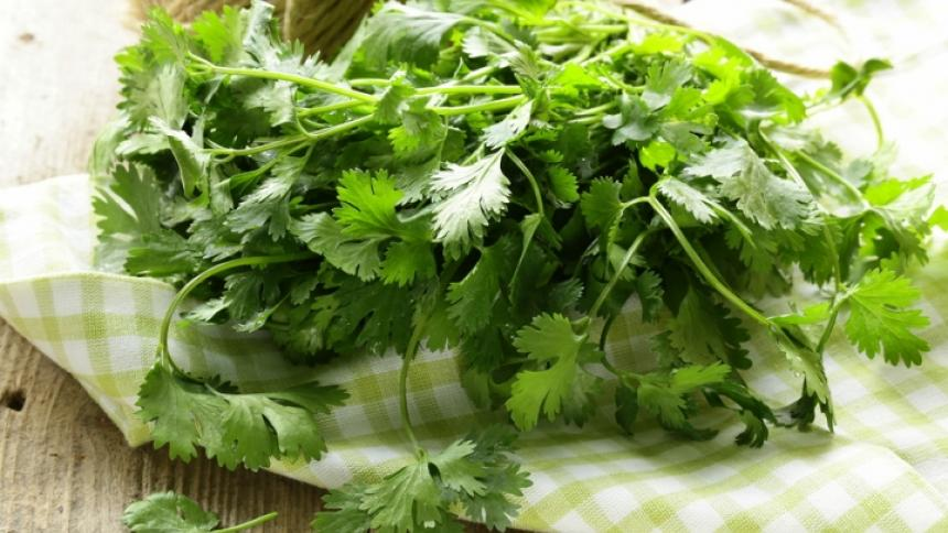 Food As Medicine: Coriander/Cilantro (Coriandrum sativum, Apiaceae)