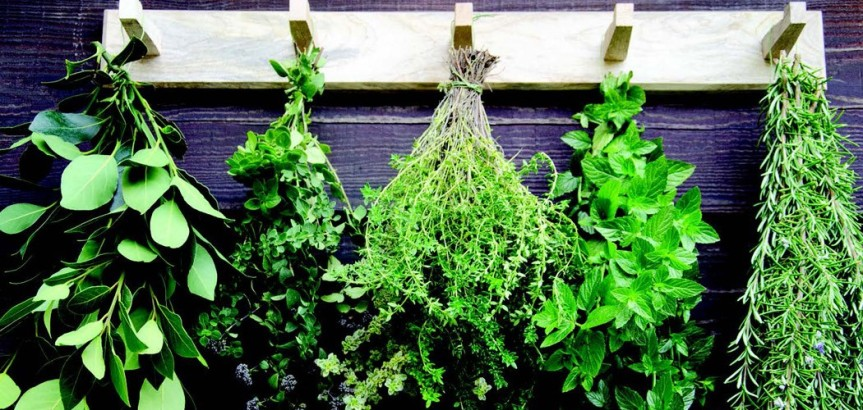 herbal-drying-banner