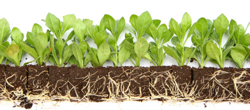 plant-propagation-roots