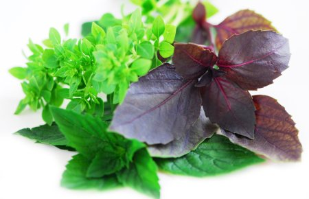 Basil: Health Benefits and Nutritional Information