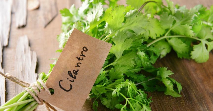 Cilantro: Health Benefits