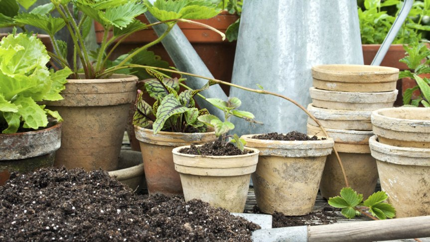 Let's Plant Some Herbs – Selecting Containers, Soil Mixes forContainers