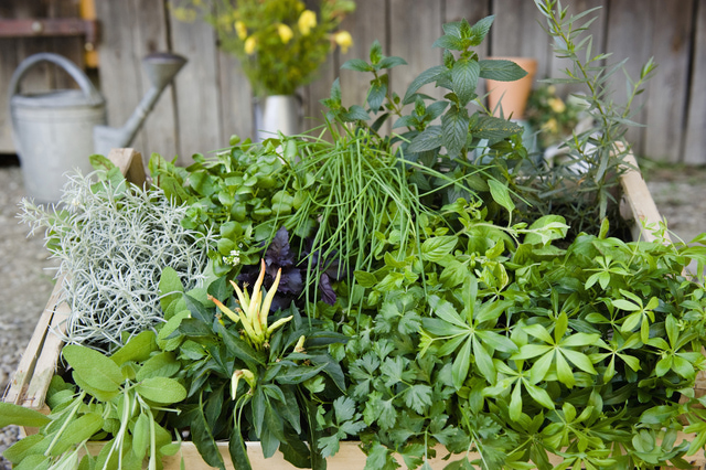 Let's Plant Some Herbs – Ideas for Space
