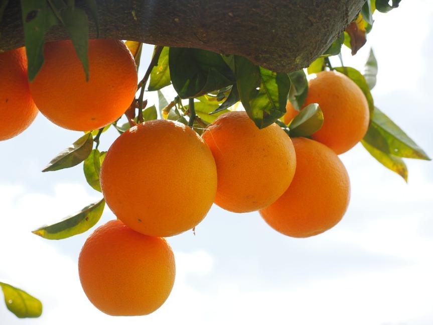 Orange Essential Oil May Improve Symptoms of PTSD, SayResearchers