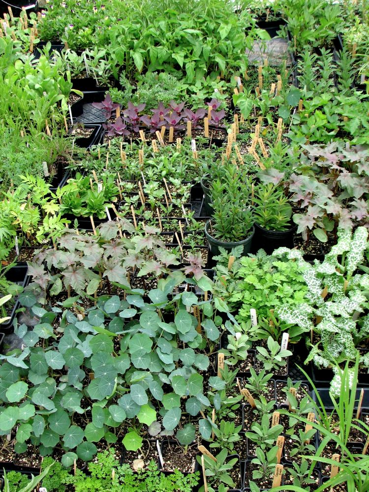 Let's Plant Some Herbs –Propagation