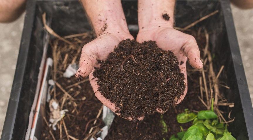 Improving Garden Soils ForHerbs