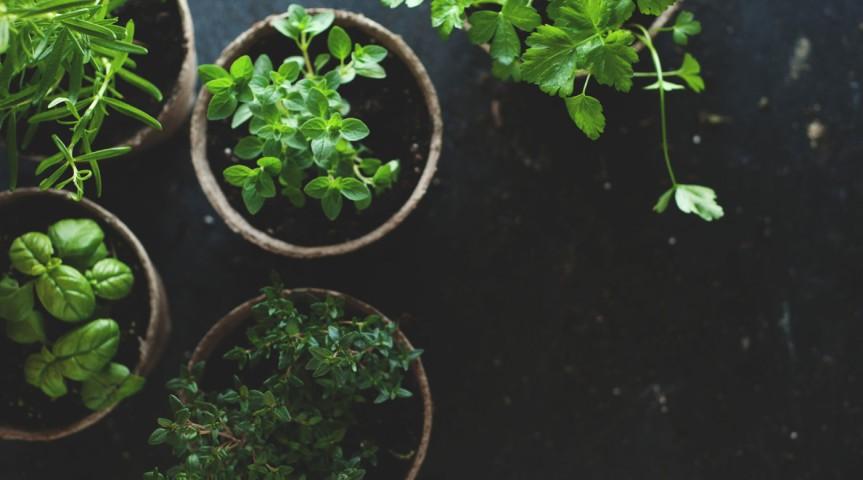 Propagating Herbs
