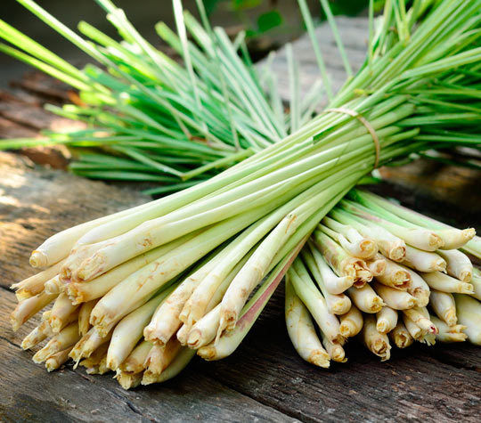 Lemongrass Benefits to Support Your Health