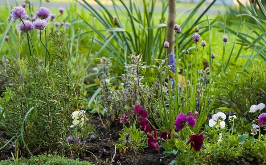 Your Medicinal HerbGarden