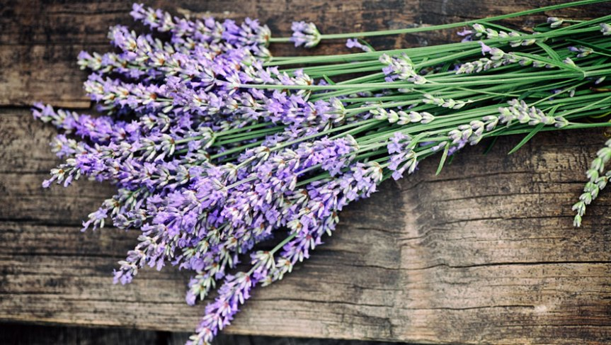 Lavender: Health Benefits and Uses {Updated}