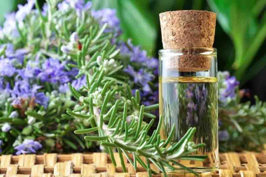 How to Use Rosemary Oil for HairGrowth