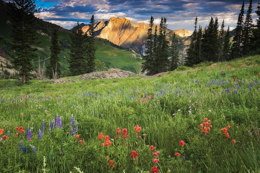 albion-basin-wildflowers-utah-images