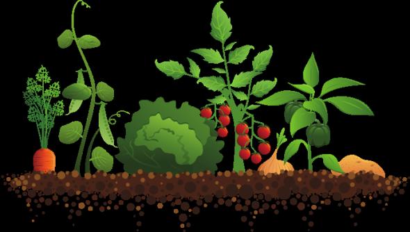 community garden veggies