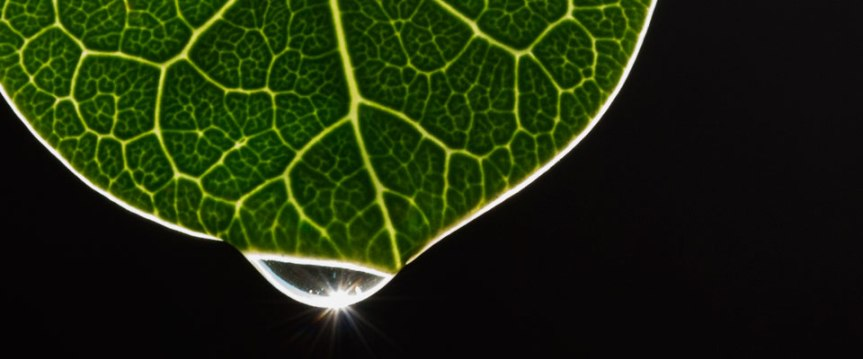 HOW PLANTS ACQUIRE THEIRENERGY