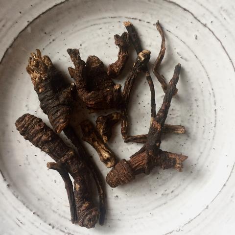 osha root roots