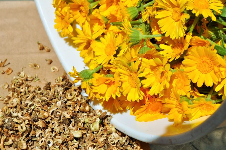 Calendula – A Golden Herb for Garden andKitchen