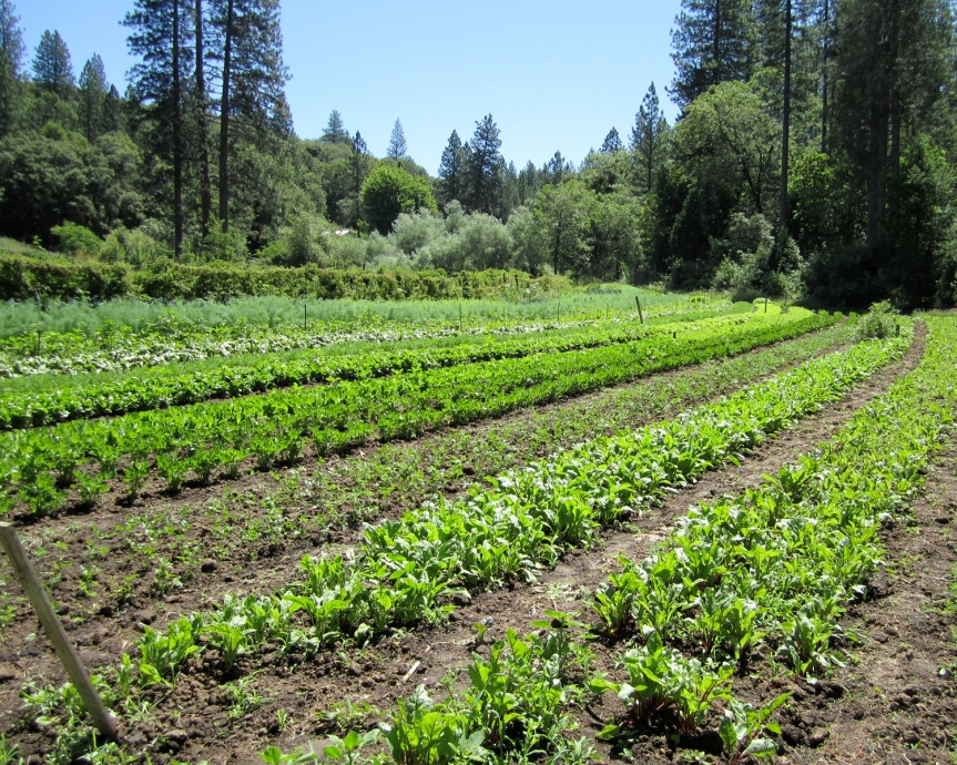 covenstead farm plants