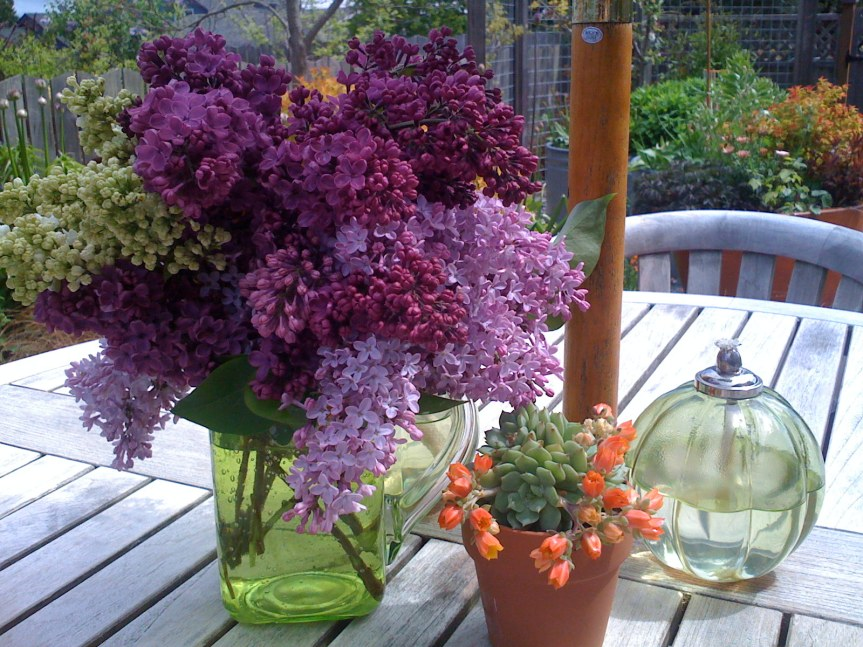 Organic Garden Guide: Growing Lilacs inContainers