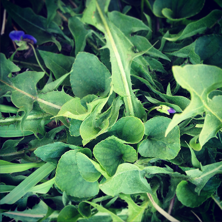 Springtime Herbs To Have OnHand