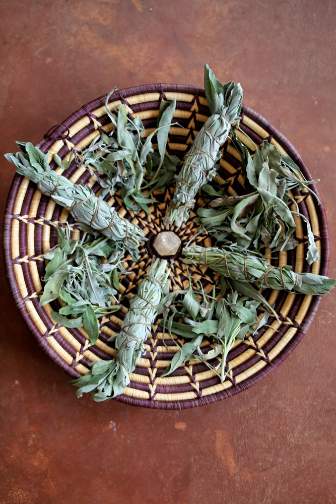 Plant Profile: White Sage {Salviaapiana}