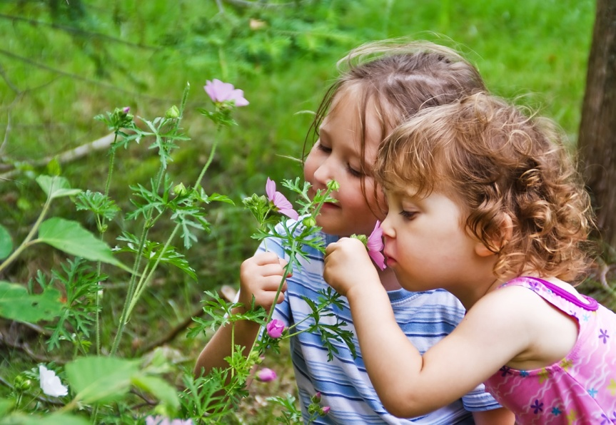 Fun On The Wild Side ~ INTRODUCTION TO HERBS FOR KIDS: WILDCRAFTING
