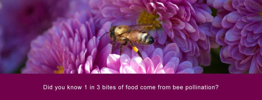 Honey Bees; Heros of Our Planet