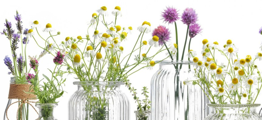 Your Apothecary Cabinet: Common BaseOils