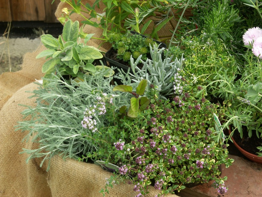 Our Herb Garden Guide for Desert Dwellers