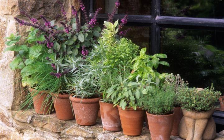 Pots-of-herbs-Alamy-large_trans++eo_i_u9APj8RuoebjoAHt0k9u7HhRJvuo-ZLenGRumA