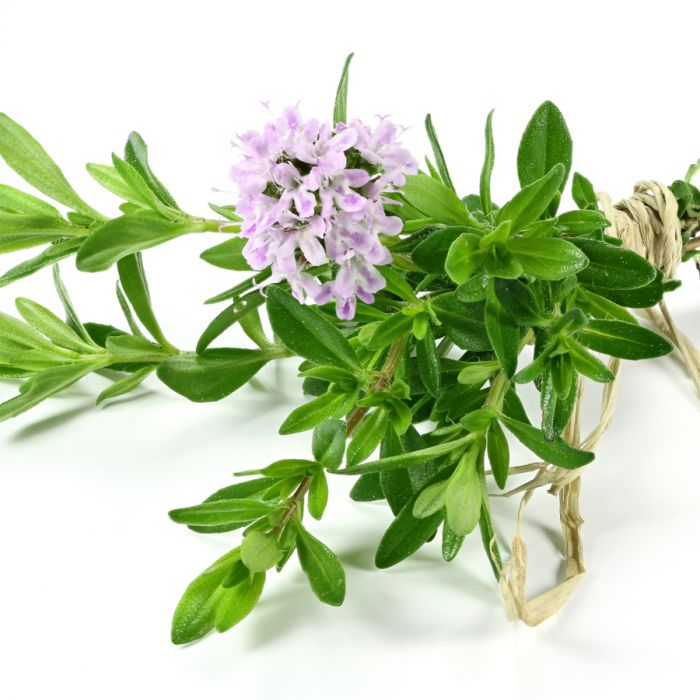 Herb Guide: It's AboutThyme
