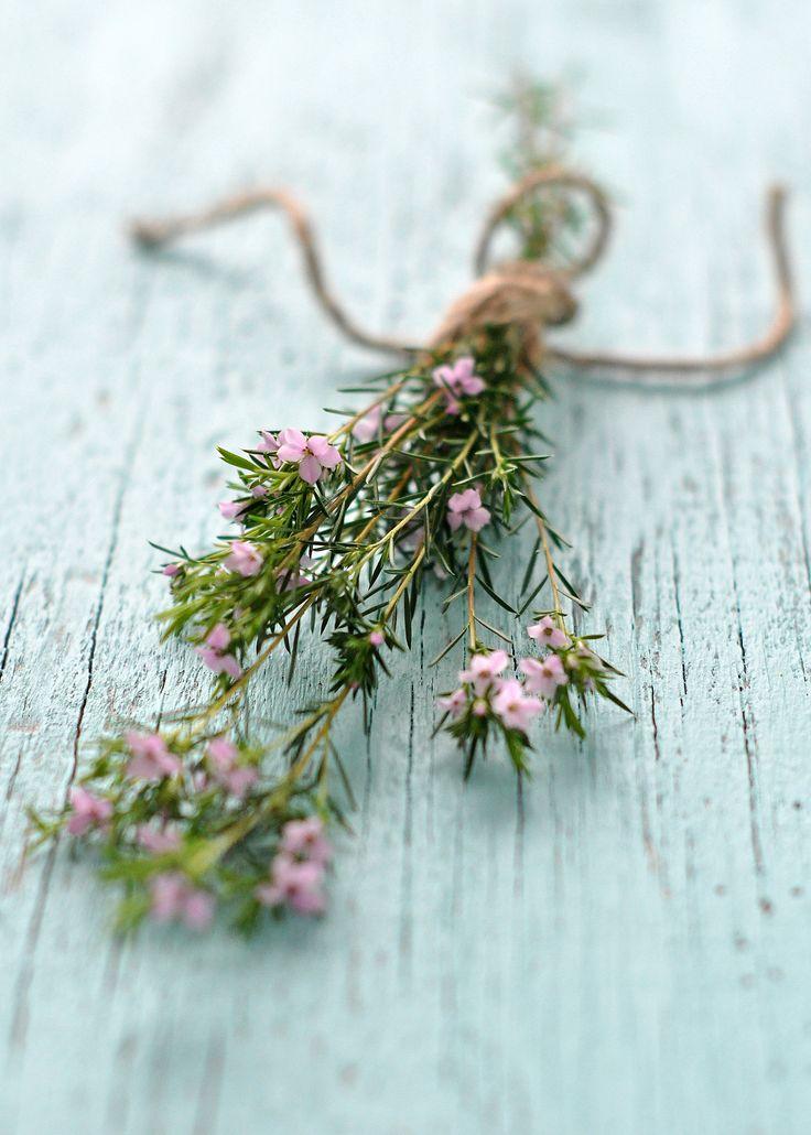 tiny pink flowers image