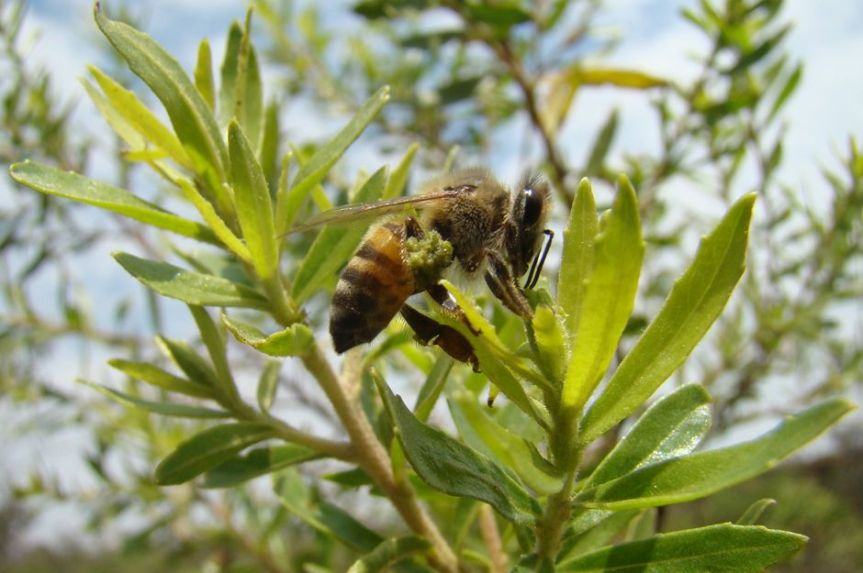 Brazilian Green Propolis Improves Cognitive Function in Elderly People Living at High Altitude