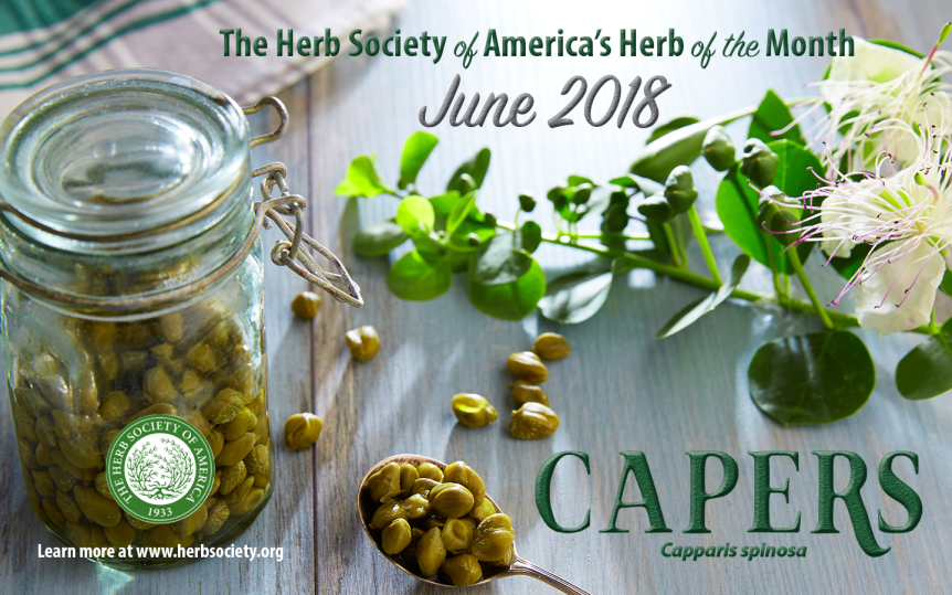 June Herb of the Month: Capers