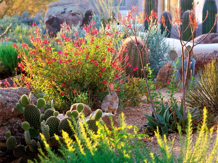 Tips For Growing and Preserving Herbs In The Low Desert