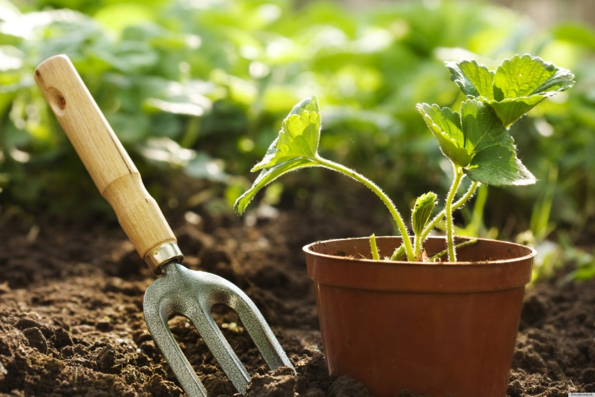 Pest Control Begins with Sound Gardening Practices