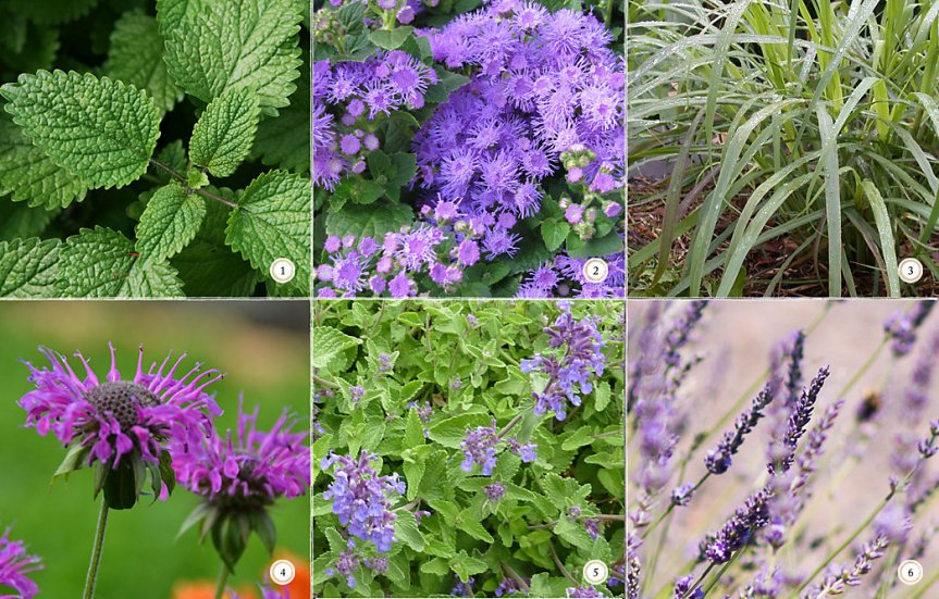 6 Bug Repellent Patio Plants